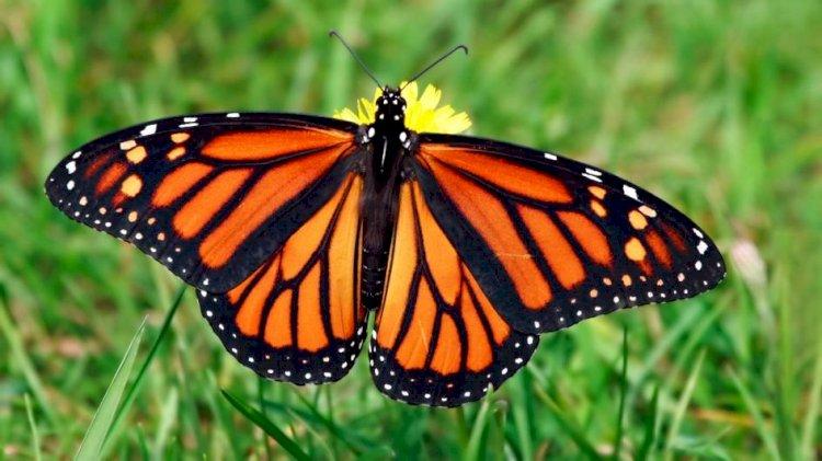 Kelebek ve Cam / Akıl ve Vahiy