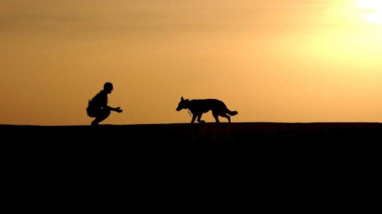 Köpek ve Sadakat